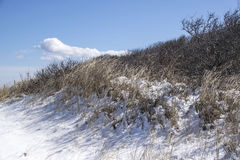Dunes of plum island. A snow covered dune located in plum island Royalty Free Stock Image