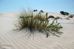Dunes at Porto Pino's Bay Stock Photo