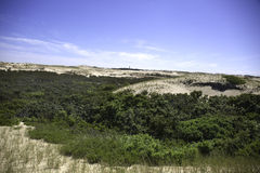 Dunes at Provincetown, MA Cape Cod. Stock Image