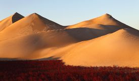 Dunes  and red beach Stock Photography