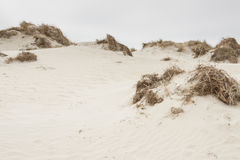Dunes on Romo Island - Denmark. Stock Images
