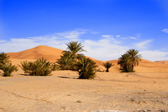 Dunes of Sahara. Dunes of the desert and blue sky Royalty Free Stock Image