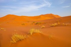 Dunes in the Sahara deformed by the wind, Morocco Royalty Free Stock Images