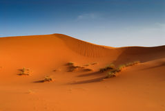 Dunes of Sahara Desert. Red Moroccan sands of Sahara Desert Stock Photos