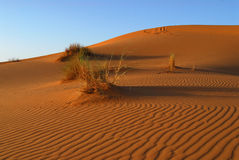 Dunes of Sahara Desert. Red Moroccan sands of Sahara Desert Stock Images