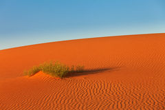 Dunes of Sahara Desert. Bush in desert Royalty Free Stock Images