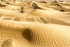 Dunes in the Sahara Desert in Tunisia royalty free stock photos