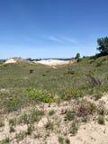 Dunes sand beach trees bushes nature coastal travel relaxation. Sand dunes and trees Stock Image