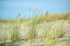 Dunes, sand and sand grass Royalty Free Stock Images