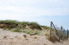 Dunes and sea grass and a bamboo barricade fence to control the drift of the sand on Cape Cod. Dunes and sea grass with a bamboo barricade fence to control the royalty free stock image