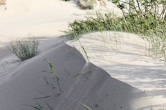 Dunes on the shore of the Baltic Sea. Beach sand background royalty free stock photos