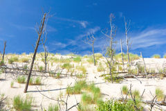Dunes in a  Slowinski National Park, Poland Royalty Free Stock Images