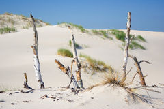 Dunes in a  Slowinski National Park, Poland Royalty Free Stock Photo