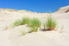 Dunes in a  Slowinski National Park, Poland Stock Images