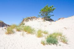 Dunes in a  Slowinski National Park, Poland Royalty Free Stock Photography