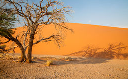 Dunes of Sossusvlei Stock Photos