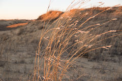 Dunes of Spirit Sands Park, Manitoba Stock Photography