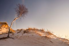 Dunes at sunrise landscape Royalty Free Stock Image