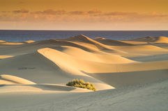 Dunes at sunset Royalty Free Stock Image