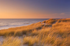 Dunes at sunset on Texel island, The Netherlands Royalty Free Stock Images