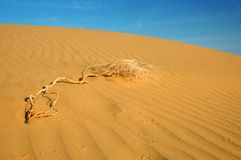 Dunes of  the Thar desert,Rajasthan,India Stock Photos
