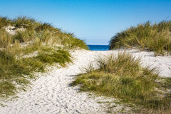 Dunes to Baltic Sea on Darss Peninsula, Germany Royalty Free Stock Photo