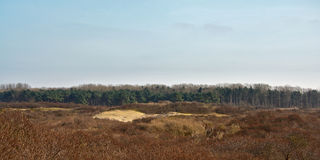 Dunes and trees at Zwin, nature reserve next to the Belgian coast Stock Photo
