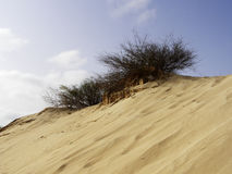 Dunes on tropical beach with yellow sand, Cape Verde Royalty Free Stock Photography