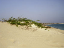 Dunes on tropical beach with yellow sand, Cape Verde Stock Photo