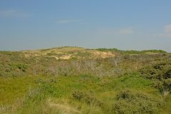 Dunes with vegetation on the North sea Opal coast, with the city of Wimereux in the distance. Dunes with green vegetation on the North sea Opal coast, with the stock photography