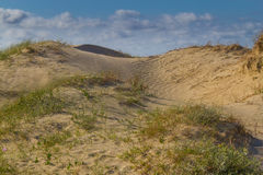 Dunes and vegetation at Cassino beach Royalty Free Stock Photos