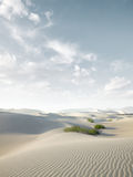 Dunes. View of nice sands dunes at Sands Dunes National Park Stock Photography