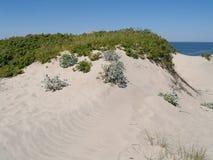 Dunes of Vistula Spit Stock Images