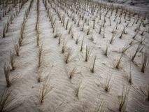 Dunes in Warnemunde near Rostock at the Baltic Sea, Germany Stock Images