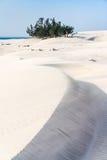 Dunes and wild beach Stock Image