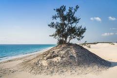 Dunes and wild beach Royalty Free Stock Photos