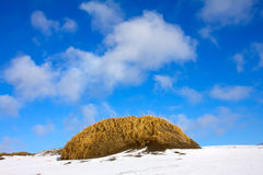 Dunes in winter Stock Images
