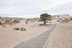 Dunes at Yyteri Beach Stock Photo