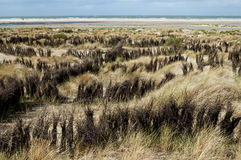 Dunescape Borkum Island, Germany Royalty Free Stock Photography