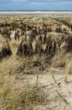 Dunescape Borkum Island, Germany Royalty Free Stock Image
