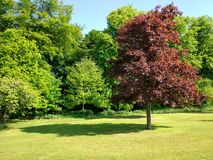 Dunfermline. Garden greeneverywhere nature free Stock Photos