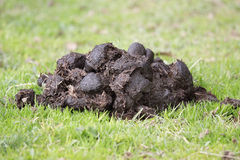 Dung Stock Image