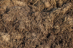 Dung. Close up  of cow dung in field Royalty Free Stock Photos