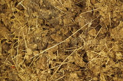 Dung close up Stock Images
