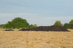 Dung heap. A dung heap on a mown grain field Royalty Free Stock Images