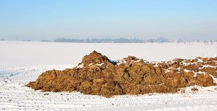 Dung heap Stock Images