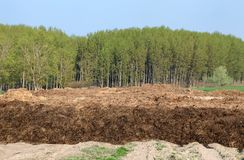 Dung hill. Heap of cow dung in field Royalty Free Stock Photo