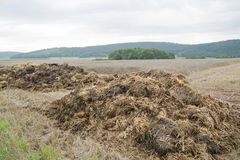 Dung hill Royalty Free Stock Image