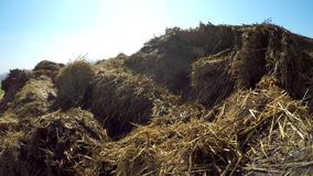 Dung hill at a field. In spring in Germany with a blue sky stock footage