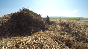Dung hill at a field. In spring in Germany with a blue sky stock video footage